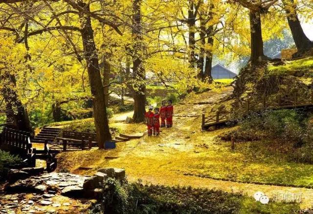 妥乐古银杏风景区位于距盘县城关镇35km之石桥镇妥乐村.