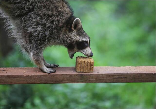 """小动物过中秋,杂粮""""月饼""""吃不停"""