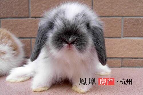 疯狂动物城看得不过瘾的小伙伴 估计最期待这一对 现实版的兔朱迪与狐