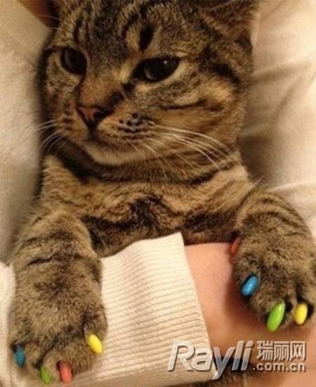 可爱的小猫美甲图案韩版