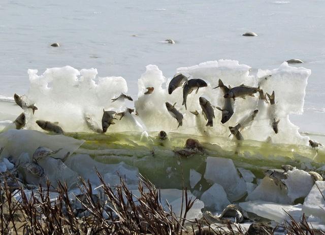 """奇景!美国南达科他州湖鱼被冰封""""空中""""(图)"""