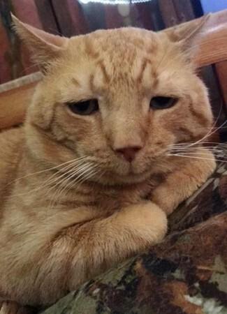 这是世界上最悲伤的猫
