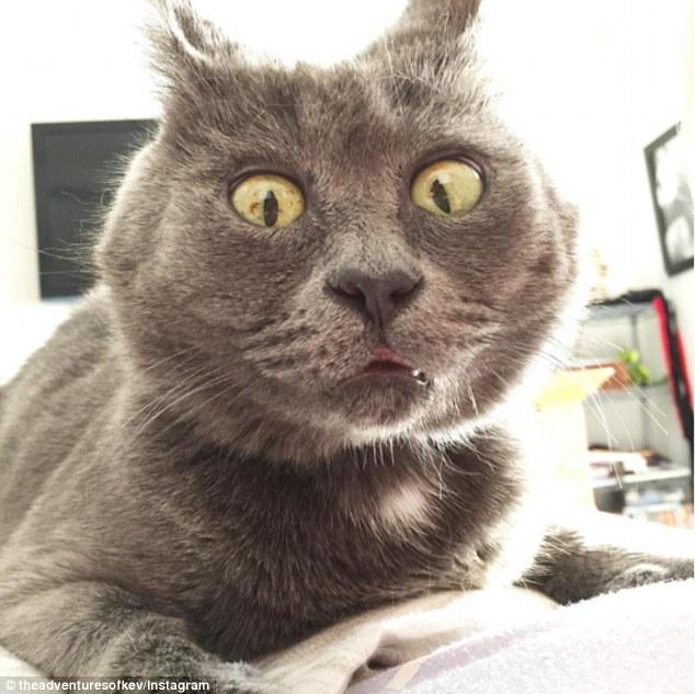 """靠""""惊恐脸""""走红网络的猫咪"""