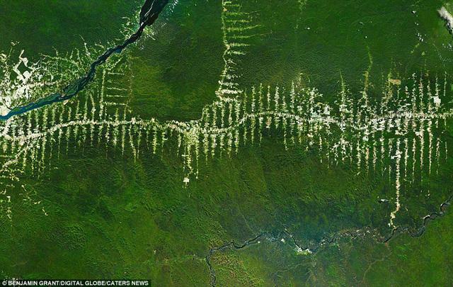 巴西亚马逊森林.
