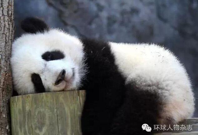 千奇百怪的动物睡姿 送给缺觉的你