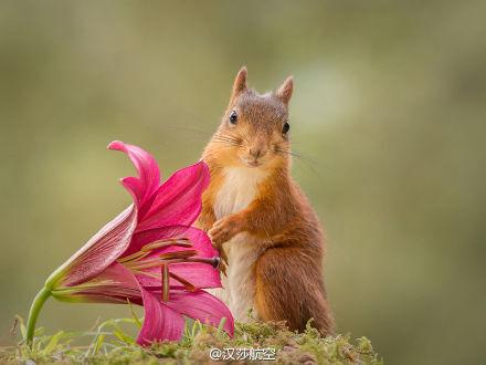 小松鼠的好奇心也是爆棚的
