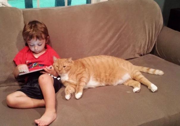 小男孩和大猫咪的友谊