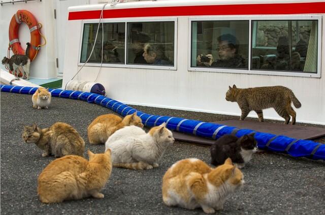 明代朝鲜猫岛地图