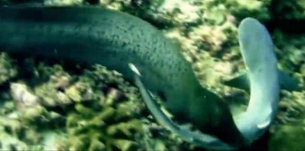 鲨鱼的身体结构图片