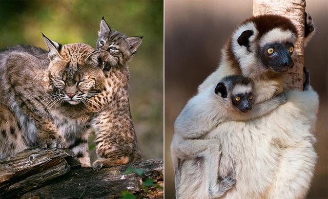 动物妈妈和宝宝们的温情瞬间