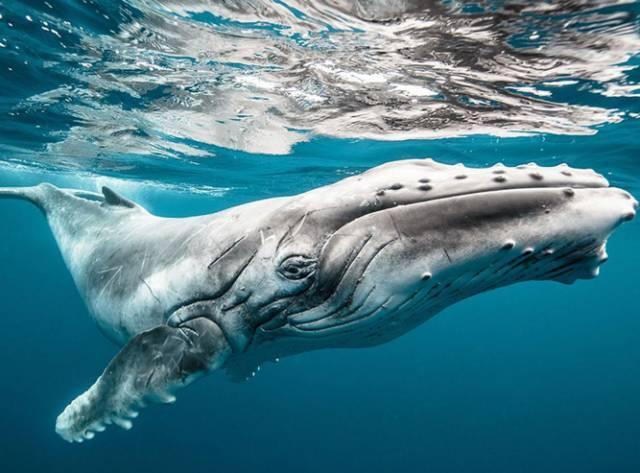 海洋动物自我保护