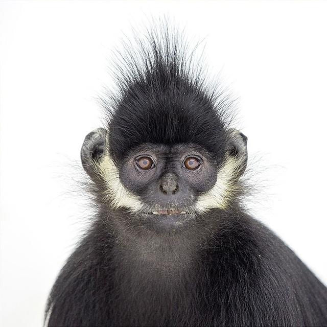 猴子动物尾巴图片