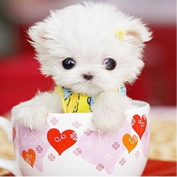 茶杯里的小动物图片大全超萌