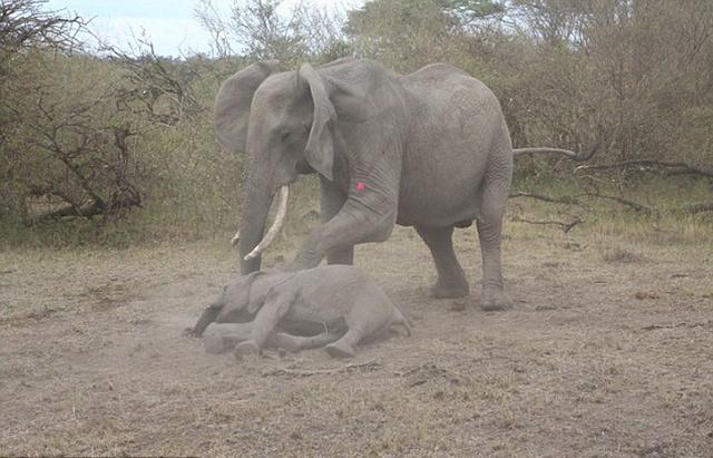 壁纸 大象 动物 犀牛 野生动物 640_411