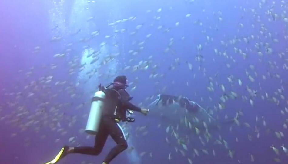 巨大蝠鲼鱼线缠身向潜水员求助 - 雷石梦 - 雷石梦(观新闻)