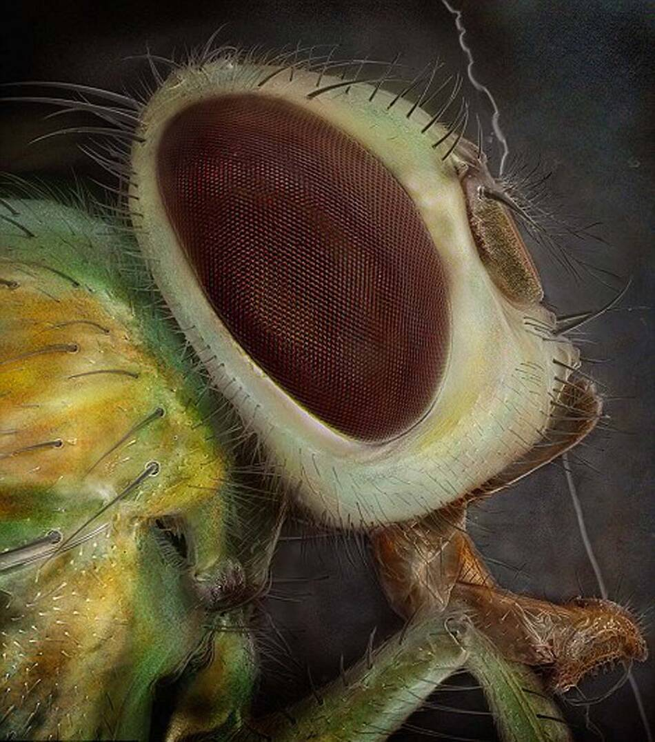 隐翅虫咬人后的图片,隐翅虫咬到擦什么药膏-君天下