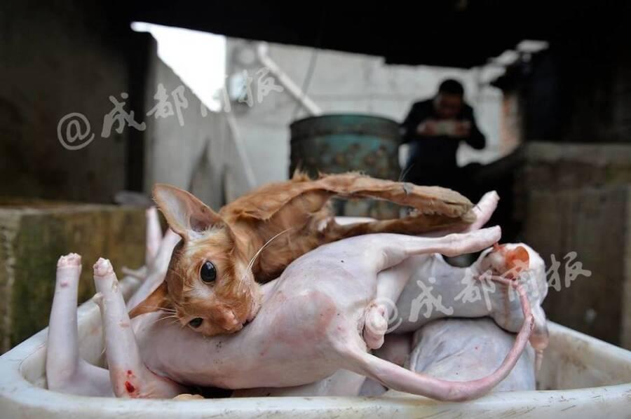 残忍!人前是暖心爱猫人士 背后却杀猫贩卖猫肉 - 梅思特 - 你拥有很多,而我,只有你。。。