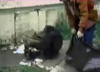 世界唯一大学毕业的猩猩去世了 曾说:我是人类 - 梅思特 - 你拥有很多,而我,只有你。。。