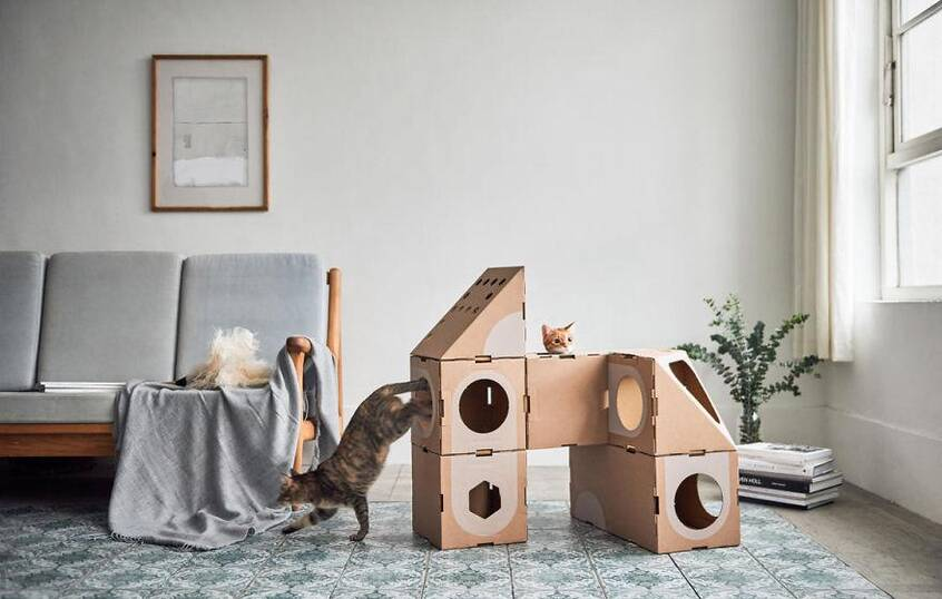 好消息:臺灣建筑師夫婦研發貓咪樂園|新聞動態-鄭州亞通紙箱廠