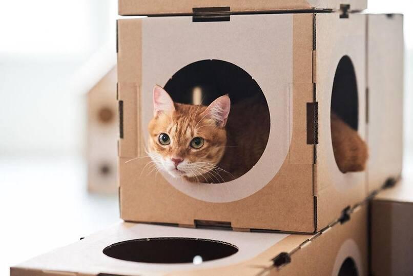 好消息:台湾建筑师夫妇研发猫咪乐园|纸箱厂动态-郑州亚通纸箱厂