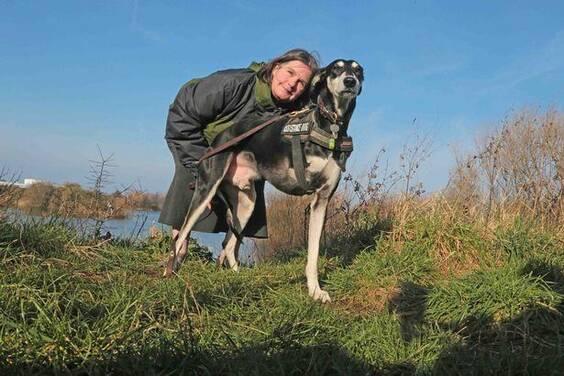 狗狗出车祸失去一条腿,被收养后感恩主人还救了她的命