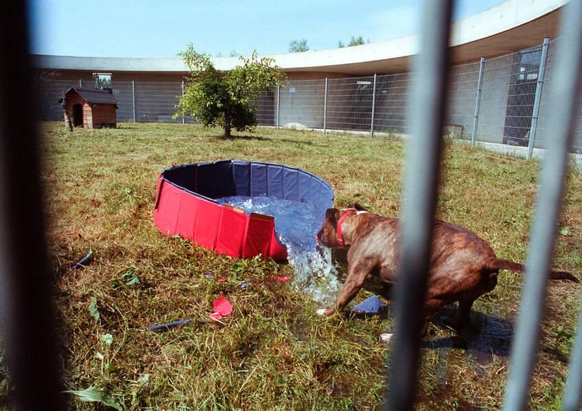 无家可归!探访欧洲最大的动物收容所 - 梅思特 - 你拥有很多,而我,只有你。。。