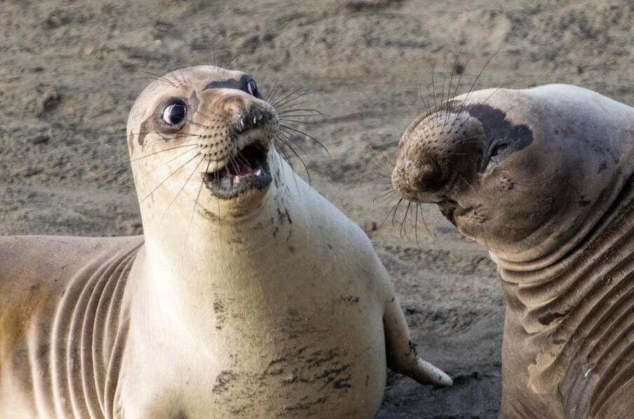 野生动物搞笑摄影决赛