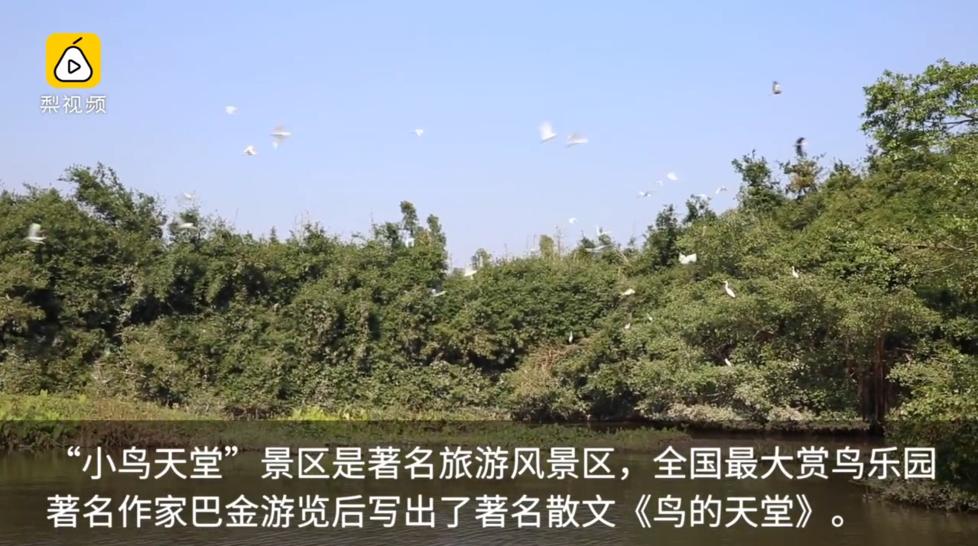 为了小鸟,广东这道屏障开创世界先河 (高清组图)