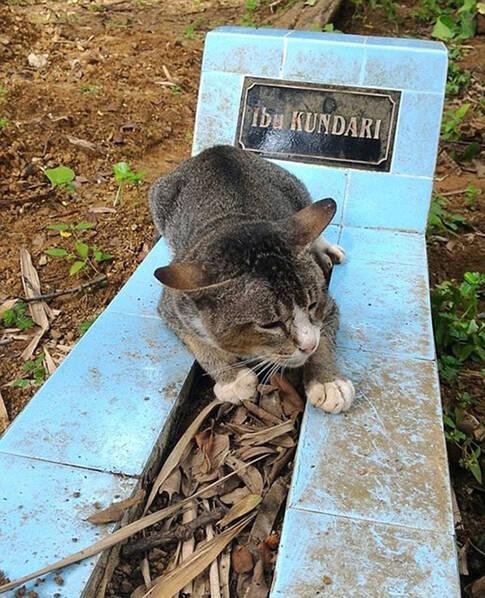 印尼猫咪不舍主人离世_在坟前守一年