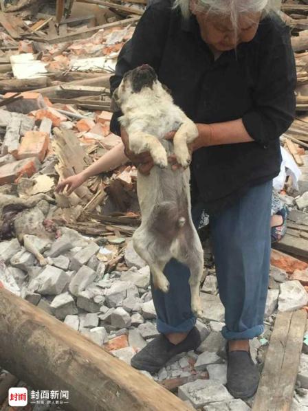 成都半夜突击拆房 几十条流浪狗被砸死 - 梅思特 - 你拥有很多,而我,只有你。。。
