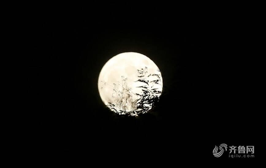 """山东摄影人镜头聚焦""""超级月亮"""""""