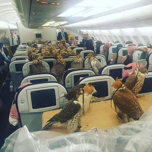 沙特王子带着他的80只鹰坐飞机