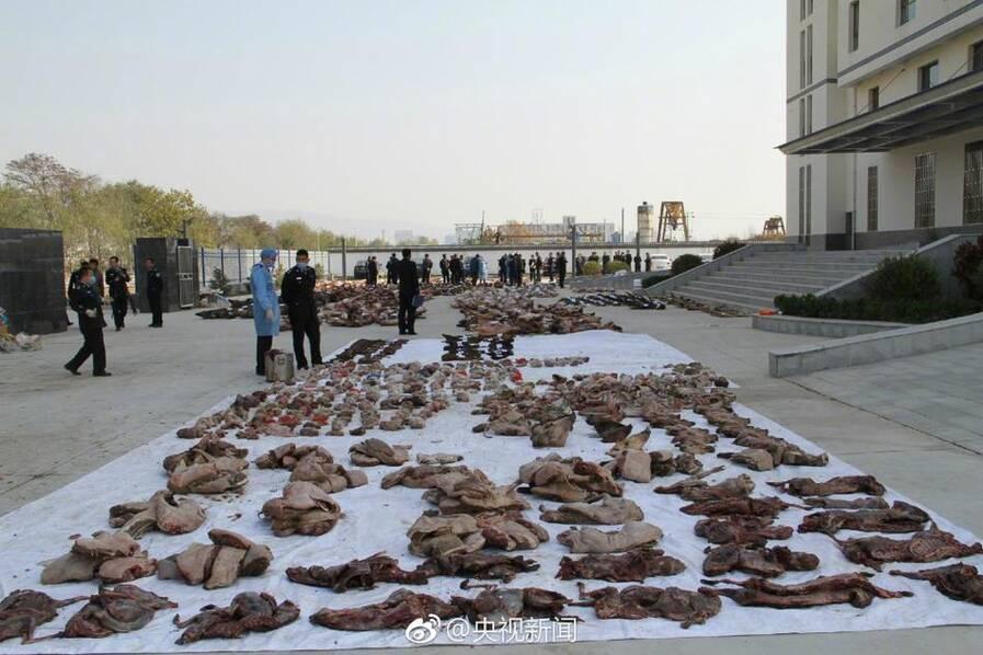 千只野生动物遭捕杀 尸体遍地 - 梅思特 - 你拥有很多,而我,只有你。。。