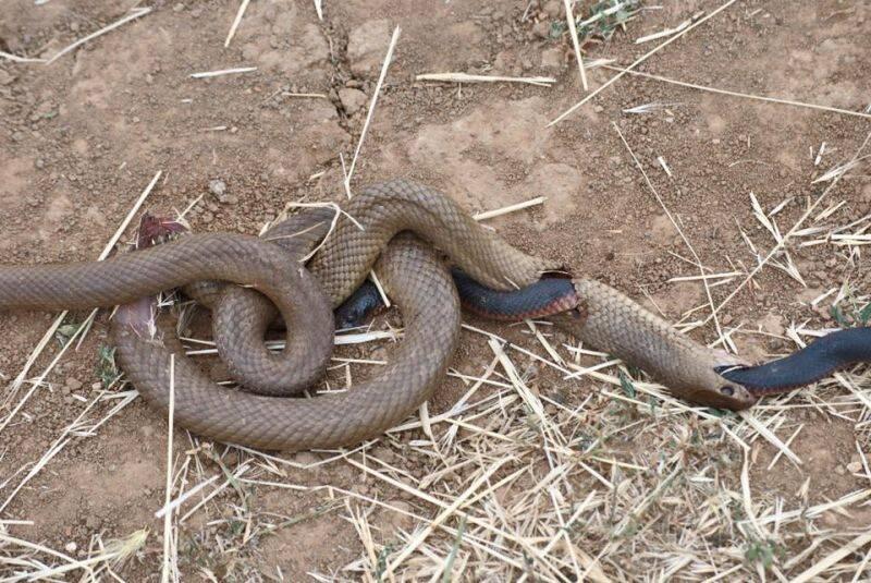 壁纸 动物 蛇 蜥 蜥蜴 800_535