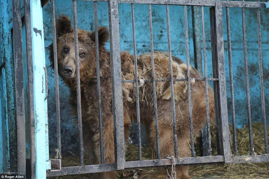 小最悲伤的动物园