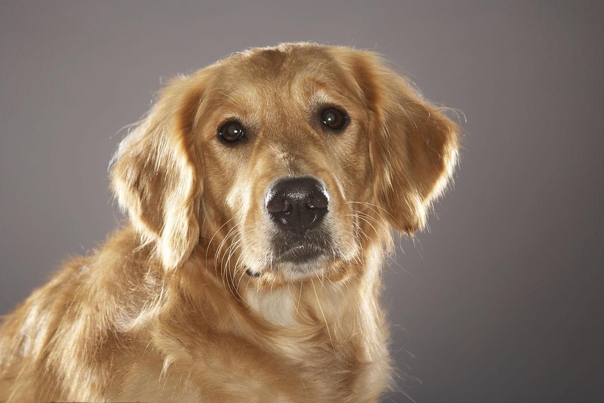 狗狗毛发掉的太严重,光泽度越来越低,是什么原因导致的呢?
