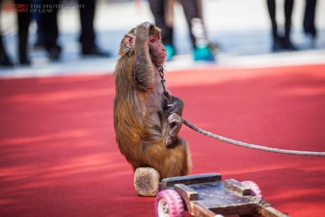 耍猴人买8只猕猴被判5年量刑过重?法官回应