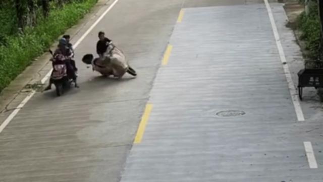 女子骑车看手机追尾,受伤倒地后仍不放手