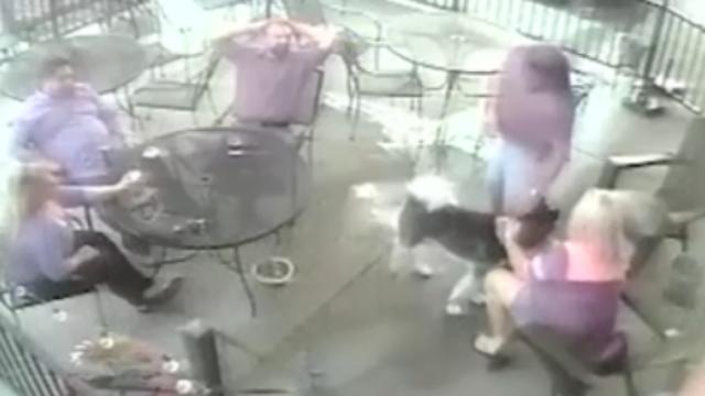 女模特在餐厅逗狗面部惨遭撕咬 监控记录惊险瞬间