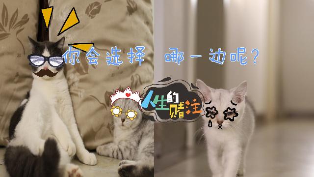 猫奴的心声:两只猫咪=双份快乐?网友:猫不在多,给撸就行!