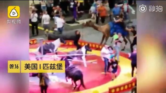 马戏团骆驼突然失控冲撞致7人受伤