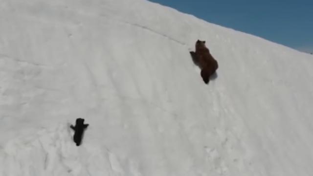 超萌!熊妈妈带仔爬雪山 小熊边爬边滑憨态万千