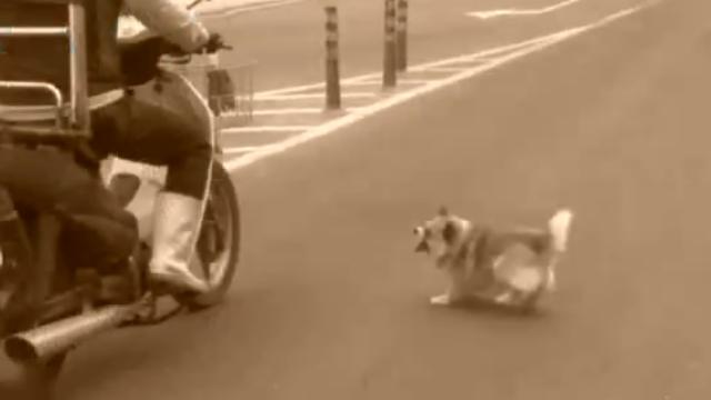 """小狗为复仇做""""路霸""""1年多,结局让人哭笑不得"""