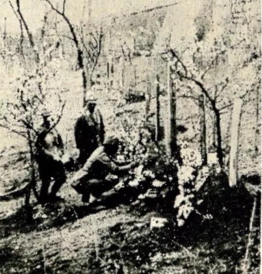 真实的台儿庄战役日军伤亡:日军仅死伤五千人!