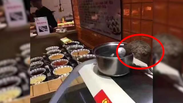 """餐厅取餐台惊现老鼠""""淡定喝水""""店家:是灭鼠时掉下来的"""