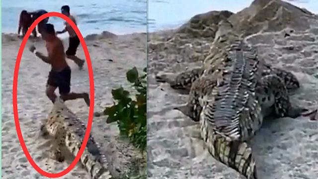 现场!一条鳄鱼突然出现在海滩 吓得一群游客尖叫着四处逃窜