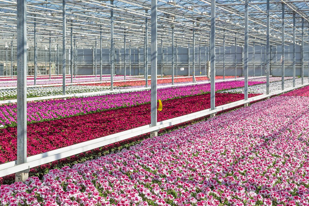 园林绿化工程中花卉栽植与养护技术