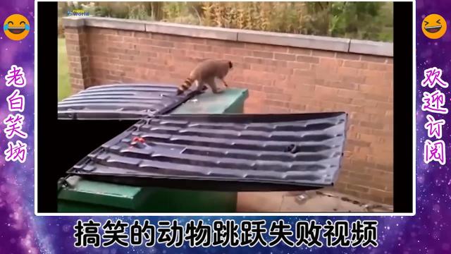 搞笑的动物跳跃失败视频