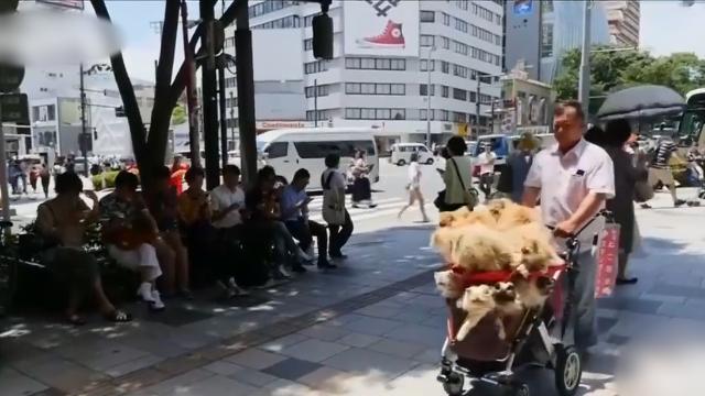 日本大爷养了一车猫咪,每天带出去玩耍,非常温馨!