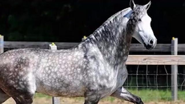 全球骏马排行榜,哪个是世界上最漂亮的马?
